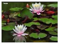 Ciri-ciri khusus pada tumbuhan