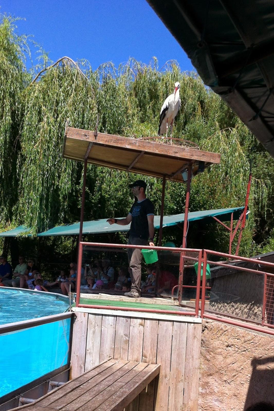 Парк Аистов - аква-шоу- аист на крыше