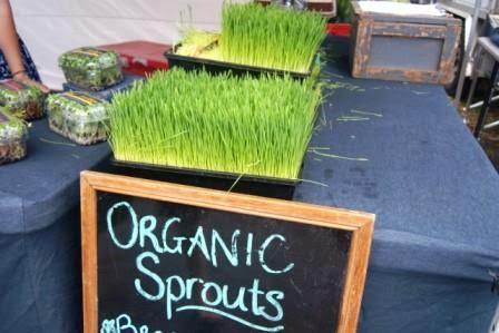 finding the a wheatgrass shot before work in the morning - impossible?