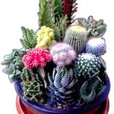 souvenir-tanaman-hias