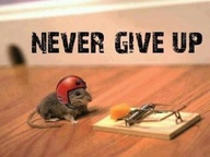 Mouse with helmet on staring at cheese on mousetrap- moral of story is never give up