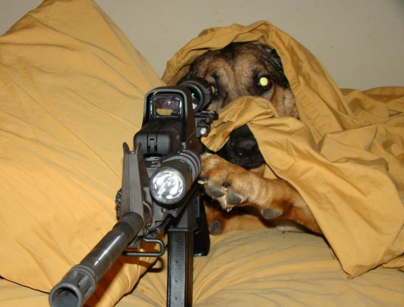 Dog shooting gun