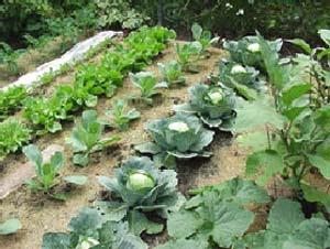 Edging design ideas Slugs in the Home Vegetable Garden
