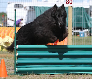 Agility  pics