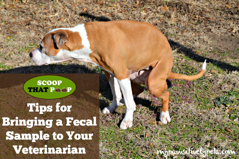 Tips for bringing a fecal sample to your veterinarian