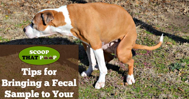 Bringing a Fecal Sample to Your Veterinarian | #ScoopThatPoop ...