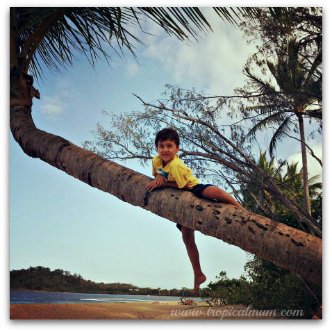 Climbing a tree at the beach