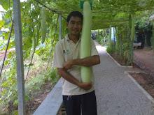 ปรารถนาจะให้มีที่ข้างร่มเห็ด โรงเรียนอนุบาลราชบุรี