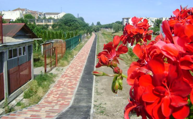 Canalul Aranca la Sannicolau Mare
