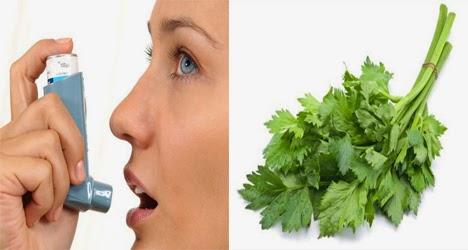 obat asma dengan seledri