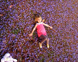 lying down amongst Jacaranda Merewether