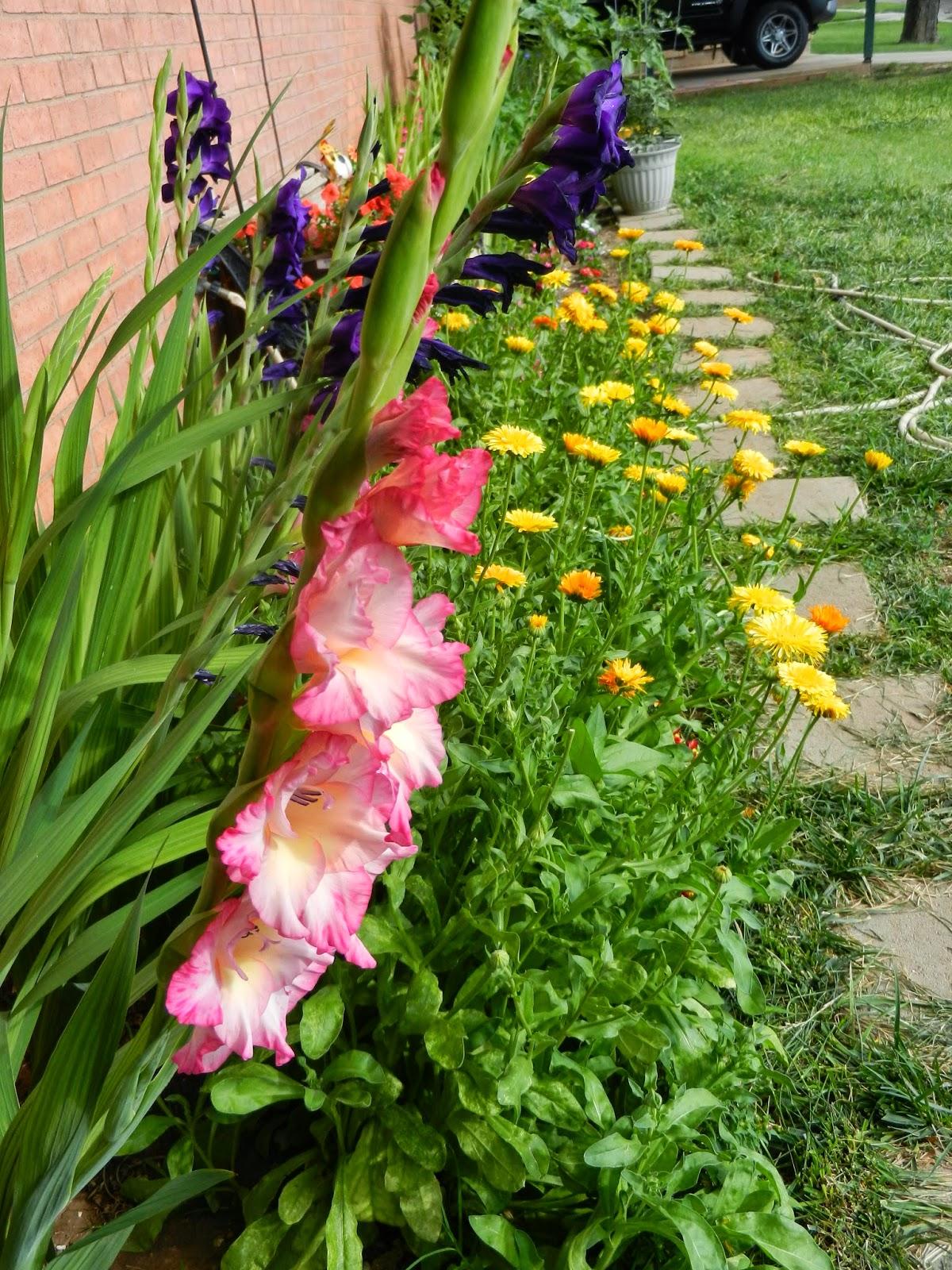 summer garden picture