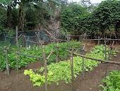 Horta orgânica.