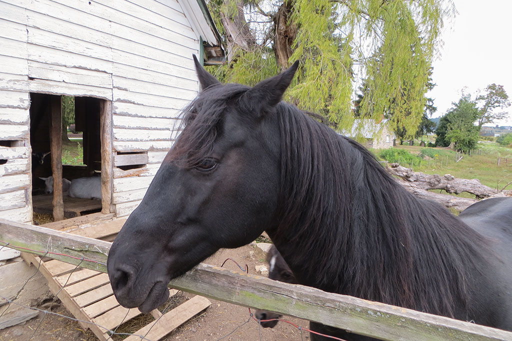 Horse at the Historic Round Barn