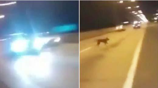 'Perro teletransportado' aparece de la nada sobre autopista