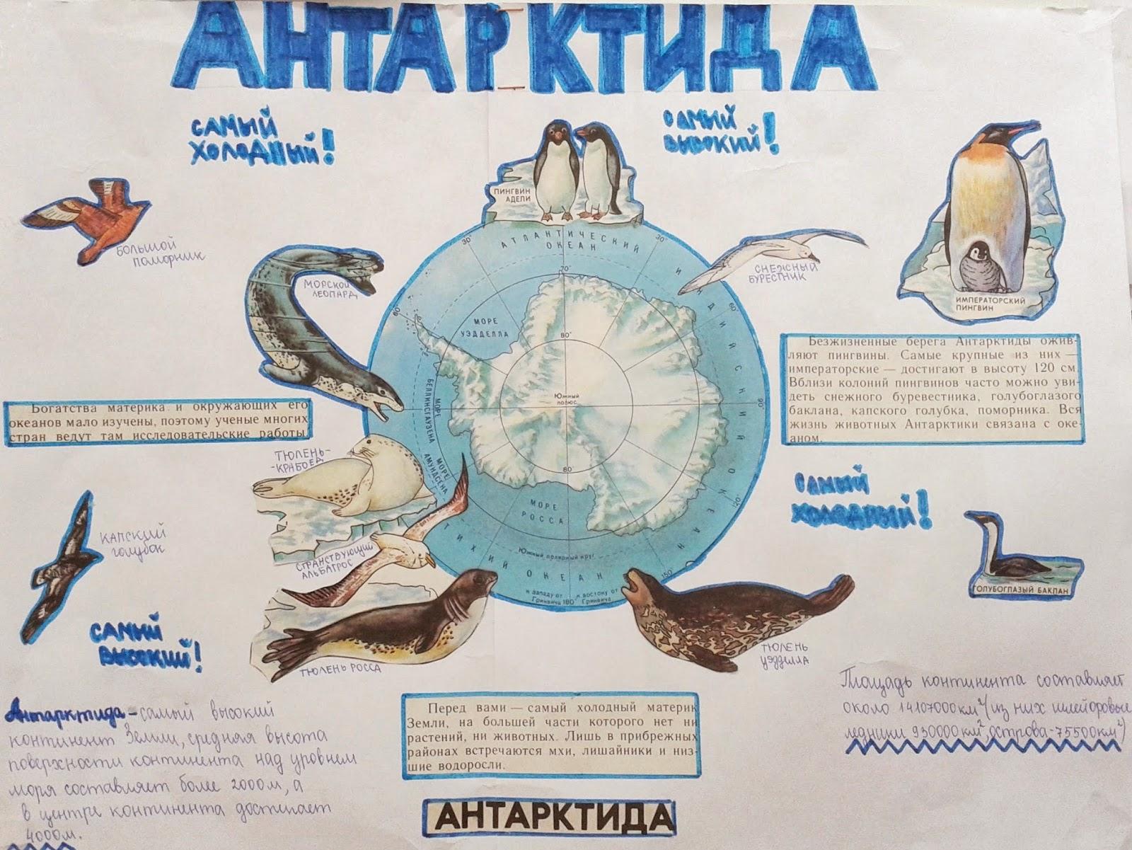 Доклад антарктида 5класс