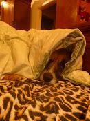 Nelly dormindo