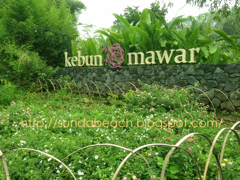 kebun mawar situhapa gate garut west java indonesia