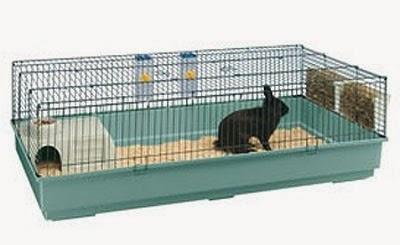 Mi veterinaria online me han regaladado un conejito y ahora como lo cuido - Casas para conejos enanos ...
