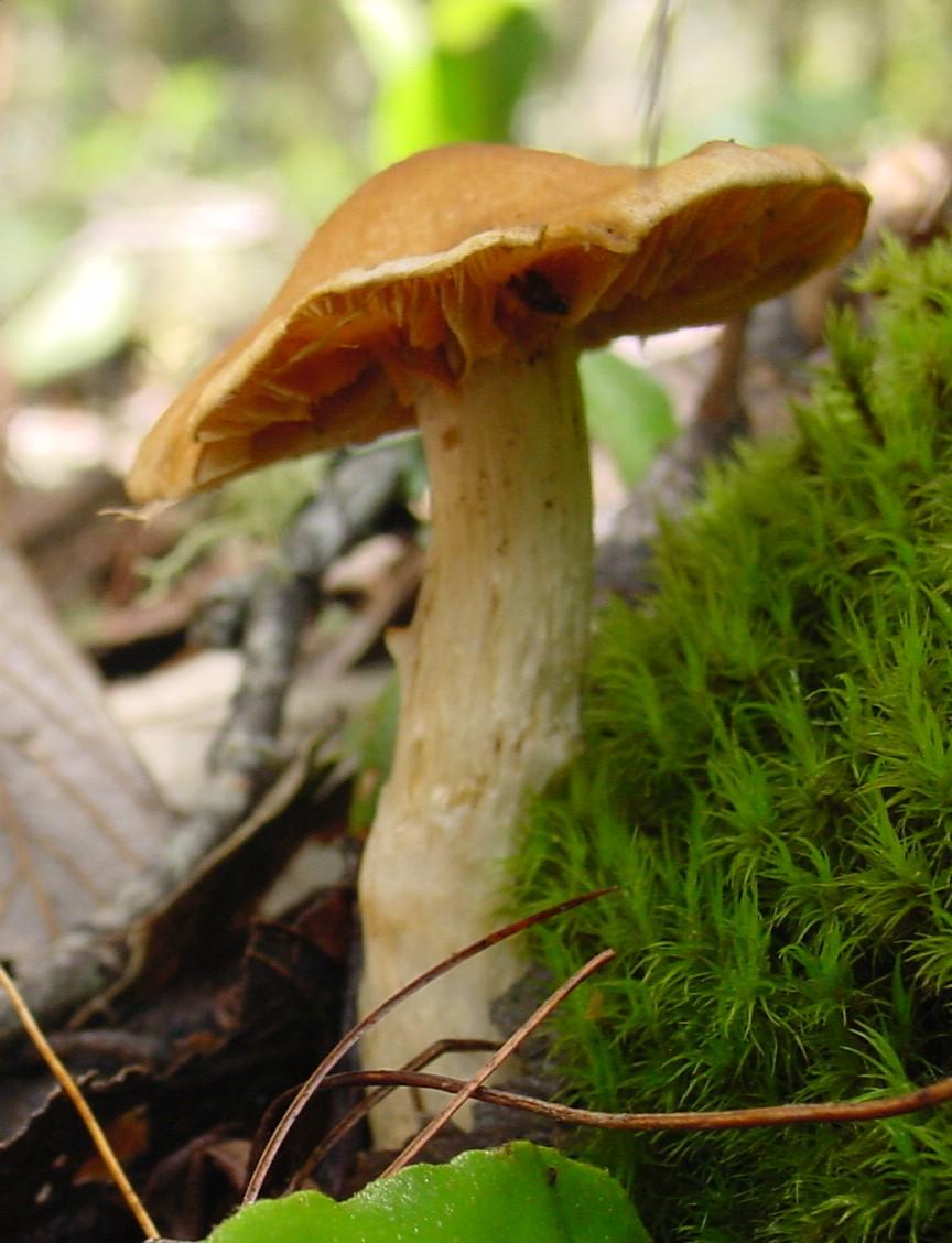 http://1.bp.blogspot.com/-0Romy_nJjKs/UIQtNcH-c-I/AAAAAAAAAPw/7z5jEDYwTHo/s1600/Fungus_ne5.jpg