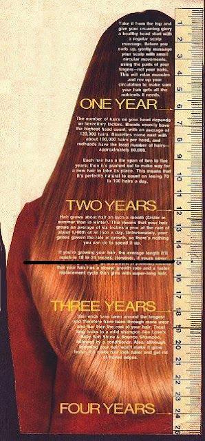 hair-growth-chart.jpg