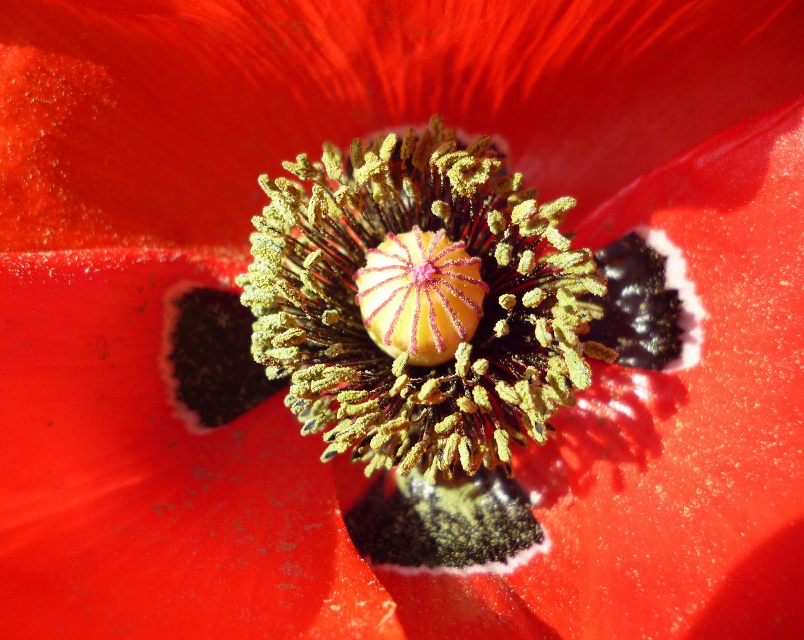 Journal de bord d 39 un humain divin comme tout le monde les for Jardinage le monde