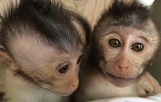 First Monkeys with Autism Created in China