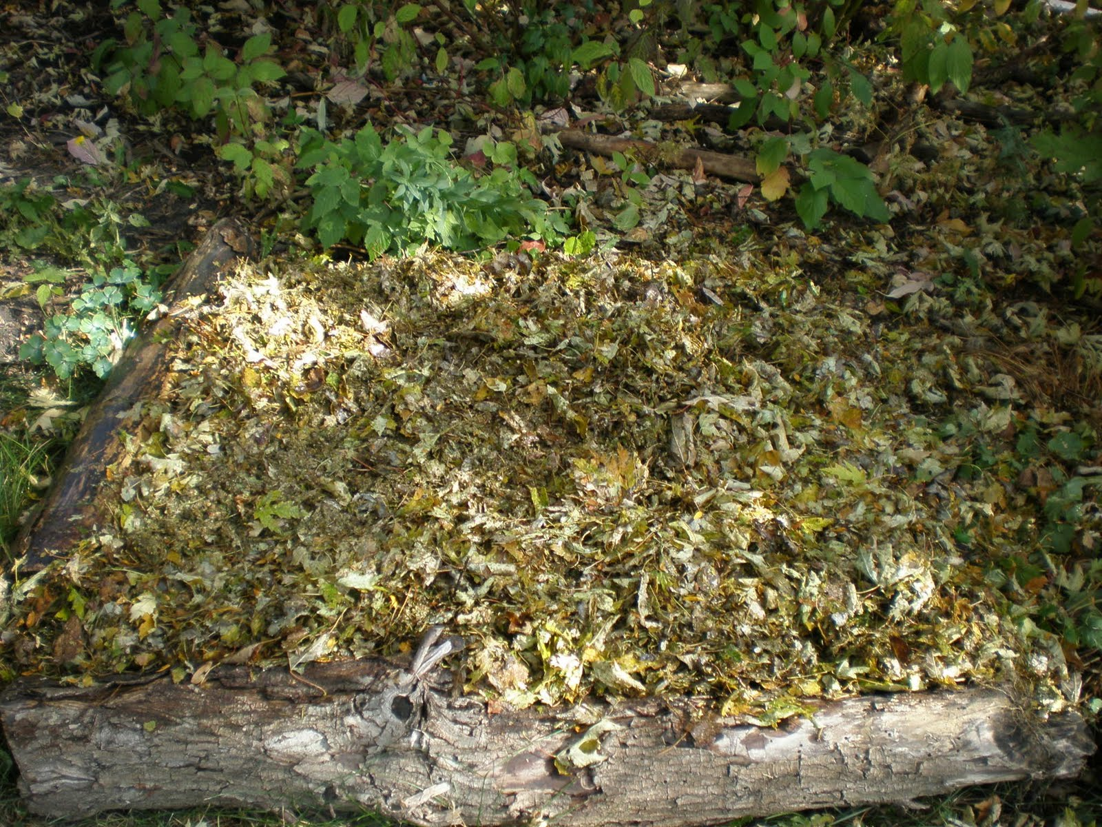 pollinators-welcome: Life In The Leaf Litter ...and other organic ...