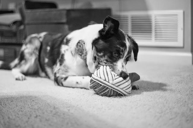 Chewy.com dog toy