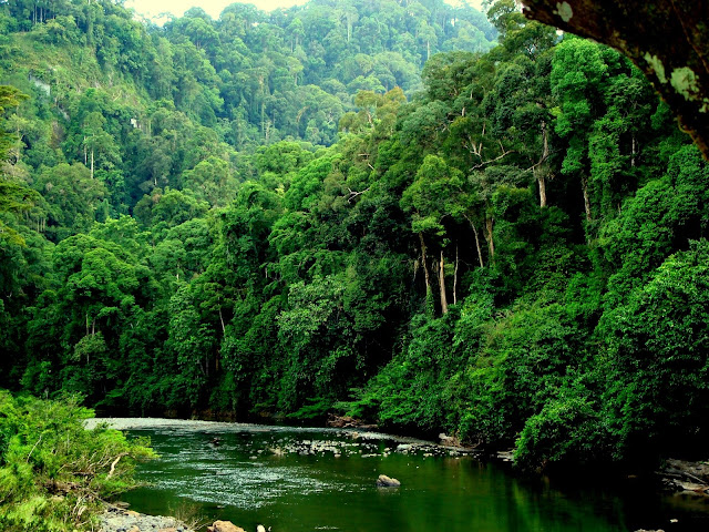 Image-Danum-Valley-Malaysia