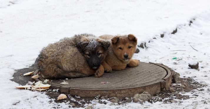 Собаки лежащие на крышке колодца