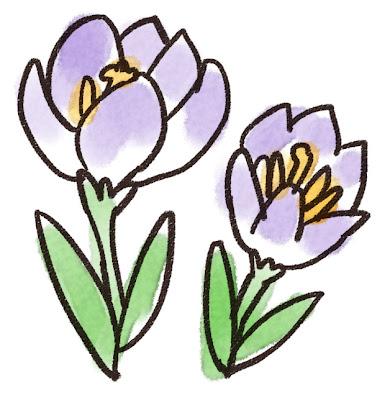 クロッカスのイラスト(花)