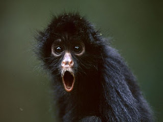Foto Monyet Lucu