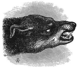 Bernard, l'ours mal léché de La Grivellière