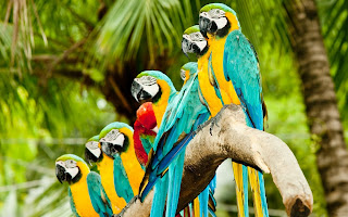 Parrot Wallpaper Hi res