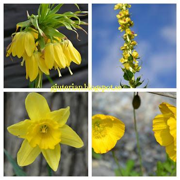 Solglittrigt gult