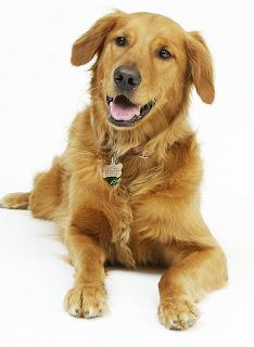 Nomes para cachorros masculinos: Cachorro feliz sentado