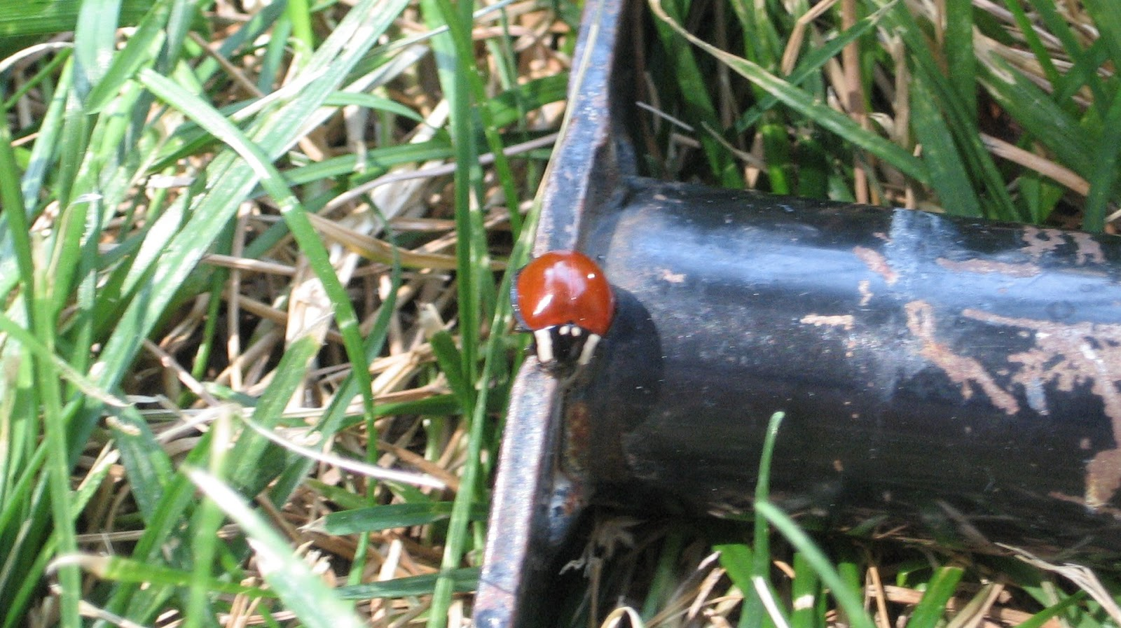 almost unschoolers backyard beetles and a book summer science