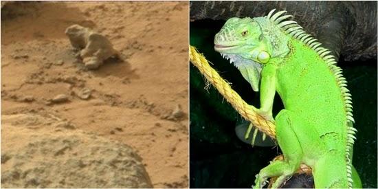 Objek Mirip Iguana Ditemukan di Planet Mars