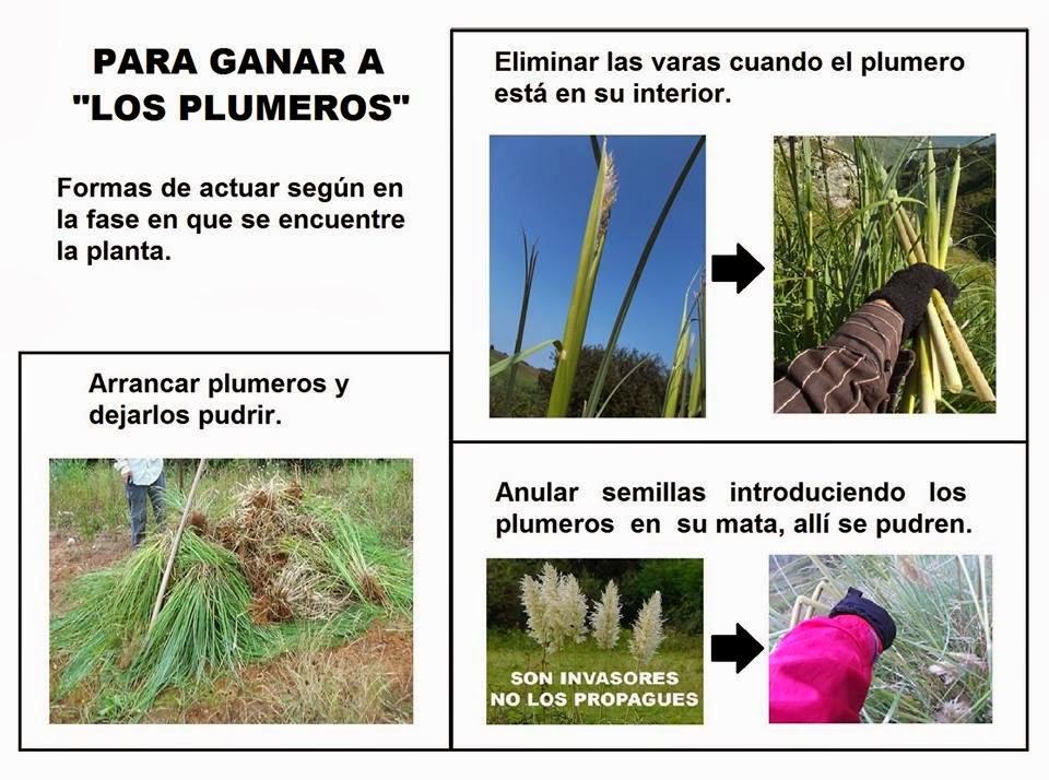 Al #Gobierno de #Cantabria se le ve el #plumero en sus #políticas ...