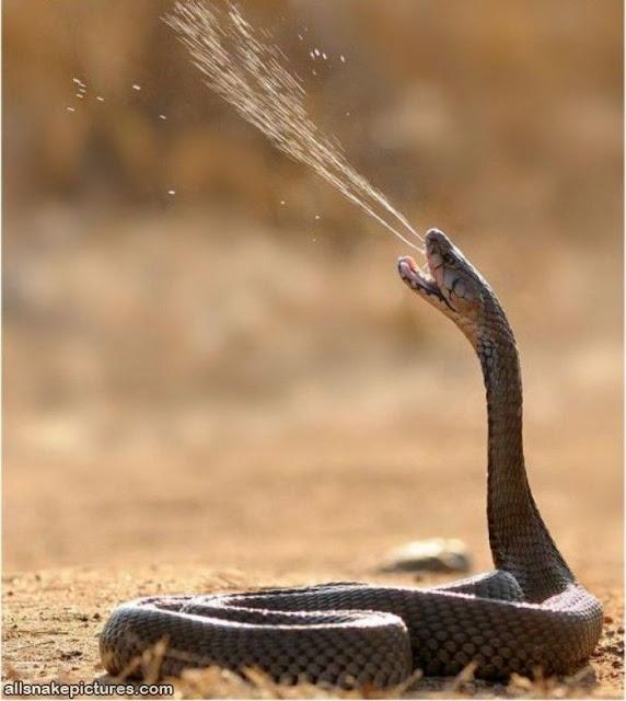 Năm rắn xem hình rắn, hình rắn độc, hình rắn hài hước