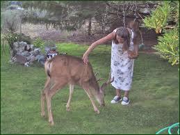 Deer pets