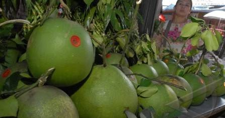 papaya vrucht kopen