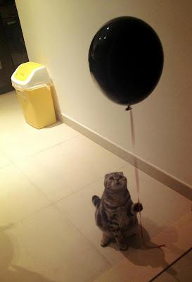 katze hat einen helium ballon