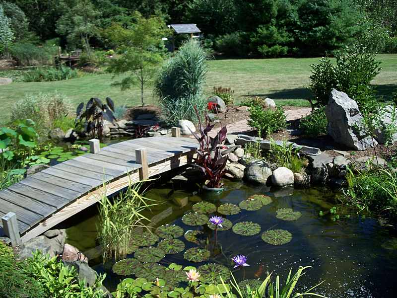 Turtle base blog creating the perfect turtle pond for Outside fish pond