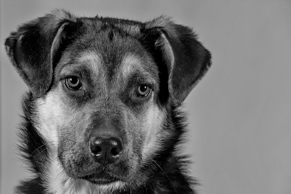 chris martin photography - humane society