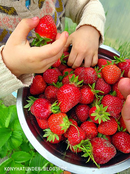 freshly_picked_strawberries