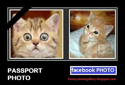 funny cat facebook photo