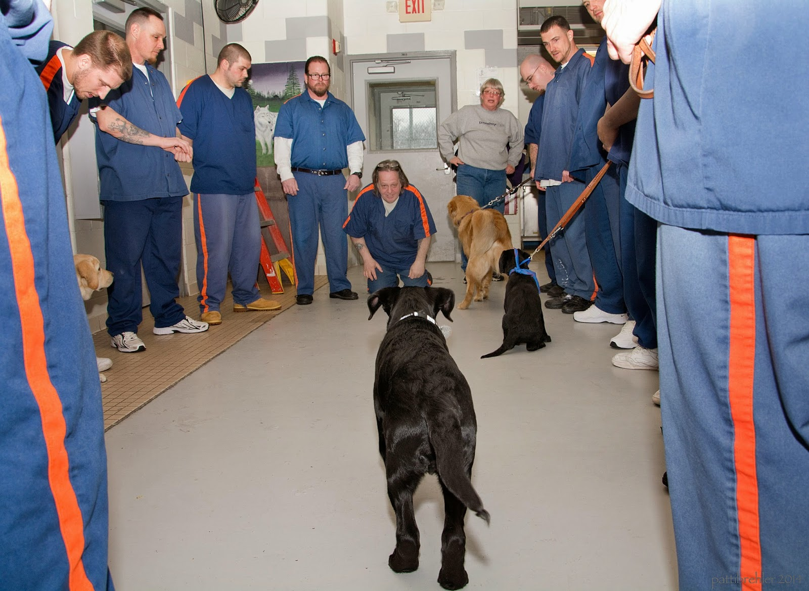 A black lab puppy is running away from the camera toward a man dressed in prison blue uniform. The man is kneeling on the cement floor with his hands on his knees, calling the puppy. There are men and one woman standing in a circle on either side of the kneeling man, the men all have the prison uniforms on and the woman is to the kneeling man's left, she is wearing a grey sweatshirt and blue jeans. There is a golden retriever facing the woman, and a smaller black lab puppy is sitting facing the kneeling man from the right.