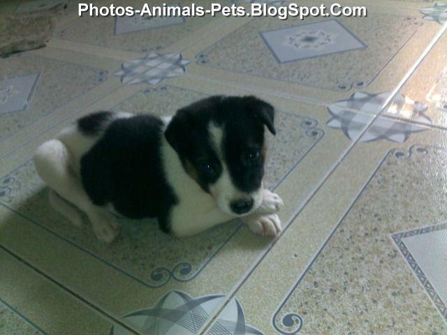http://1.bp.blogspot.com/-0W-6gSPNDNY/Tg2q8wwa4kI/AAAAAAAABgY/0wXcSnvMhe4/s1600/Puppies%2B3%2Bweeks%2Bold_0002.jpg